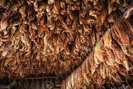 Wholesale tobacco: Dried Tobacco Leaves