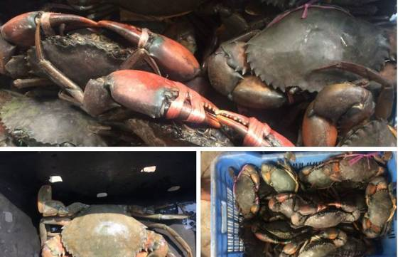 Sell Mud crabs, lobster, king crabs, seafood