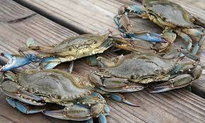 Wholesale Frozen Food: Frozen Blue Swimming Crab