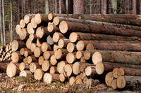 Timber Wood Logs for Sale From Ukraine