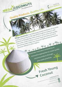 Wholesale fresh coconut: Fresh Trimmed Coconuts
