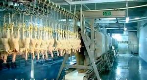 Wholesale Food Processing Machinery: Halal Chicken Slaughter Equipment Line