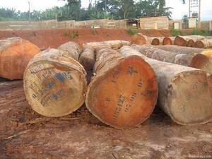 Wholesale Logs: Hardwood Logs, Lumber, Sawn Timber, Flooring, Decking Materials. Plywood