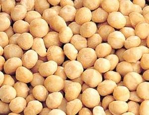 Wholesale Macadamia Nuts: Cashew Nuts, Macademia Nuts, Almond Nuts,Betel Nuts