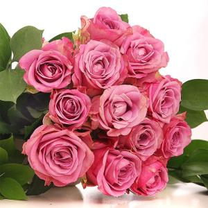 Wholesale ornamental plants: High Quality Fresh Cut Flowers / Red Roses