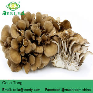 Wholesale white fruit bowl: Maitake Mushroom