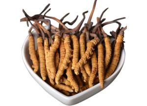 Wholesale Health Food: Cordyceps Sinensis Powder