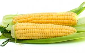 Wholesale cultivation: Buy Yellow Corn and Sweet Corn Kernels (New Cultivation Organic IQF Frozen and Fresh)
