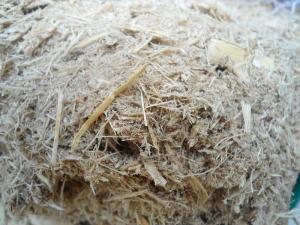 Wholesale bagasse: Sugar Cane Bagasse