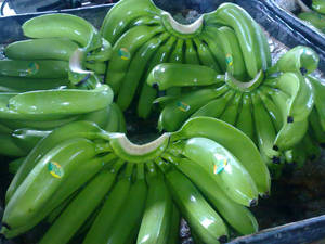 Wholesale thailand: Quality Fresh Green Cavendish Bananas From Thailand