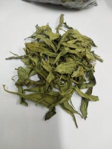 Wholesale stevia: Stevia Dry Leaves Extract Powder