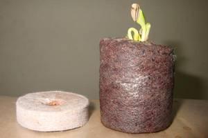 Wholesale Peat: Coco Peat Pellet