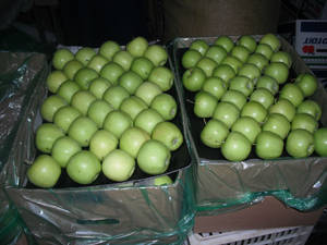Wholesale golden: Fresh Apples ( Fuji, Gala, Red, Golden Delicious Apples)
