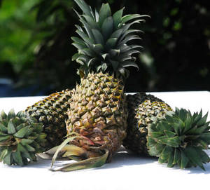 Wholesale Pineapples: Fresh Pineapples, Tropical Fruit