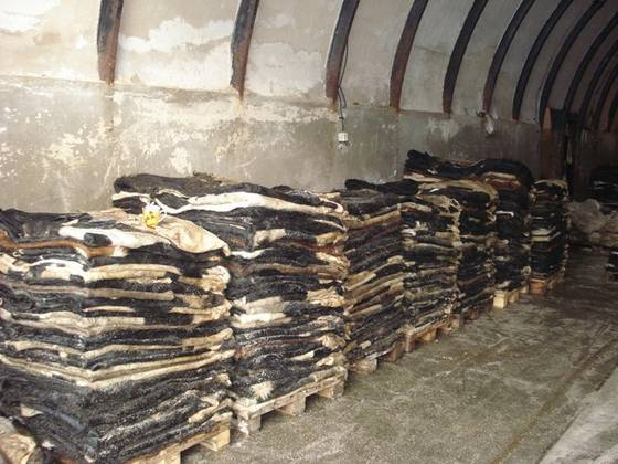 Sell Dry And Wet Salted Donkey/Wet Salted Cow Hides /Cow Head Skin