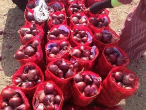 Wholesale red onion: Red and Yellow Onions