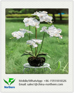 Wholesale fake flower: Decorative Real Touch White Artificial Orchid