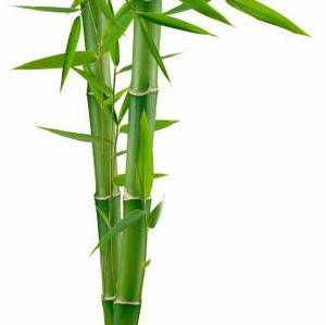 Wholesale toothpaste: Bamboo Powder Extract