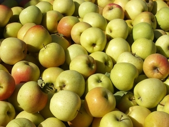Sell Golden Delicious Apples - Best Quality and best Price.