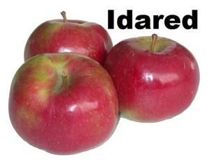 Wholesale red fuji apple: Apple Idared