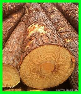 Wholesale Logs: Southern Yellow Pine Logs