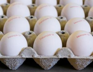 Wholesale hen house: Table Eggs