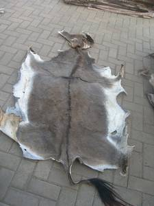 Wholesale donkey skin: Wet and Dry Salted and Unsalted Cow Hide, Donkey Hide, Goat Skin , Rabbit Skin, Sheep Skin Etc with