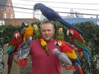 Exotic Birds, Parrots, Africa Grey Parrot, 308 Healthy Eggs, Parrot Eggs, Eggs, Hyacinth Macaw