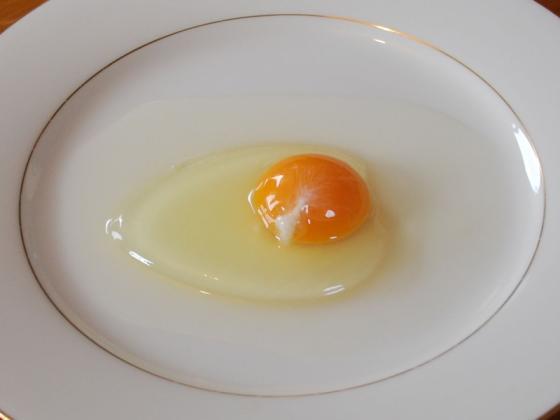 Sell Egg Powder High Whip/Whole Egg Powder/EGG YOLK POWDER for sale