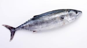 Wholesale Fish & Seafood: Top Quality Skipjack Frozen for Sale Frozen Skipjack Tuna Fish