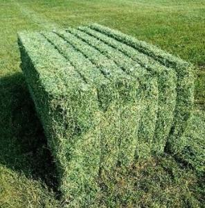 Wholesale feed: Super Top Quality Alfafa Hay for Animal Feeding Stuff Alfalfa / Timothy / Alfalfa Hay for Sale