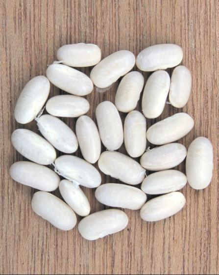 Wholesale High Quality Dry Long White Kidney Beans
