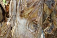 Quality Tusk Dry Stock Fish Cod / Dried Salted Cod Fish Directly From the Supplier