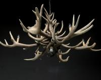Naturally Shed Whole Red Deer Antlers