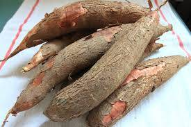 Wholesale Fresh Cassava: Cassava
