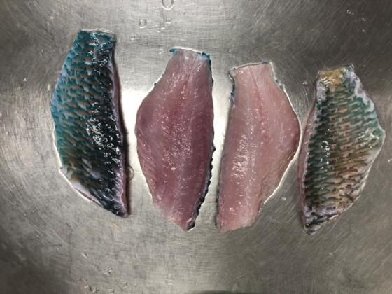 Sell parrot fish