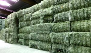 Wholesale alfalfa hay: Pure Natural Alfalfa Hay and Pellets for Animal Feed