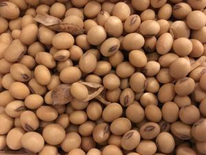 Wholesale soybean seeds: Dried Bulk Soybean Seed Non GMO Cultivation Type