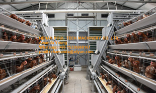 Poultry Farming A Type Battery Layer Chicken Cage Coop Equipment Cold Hot Galvanized Steel System