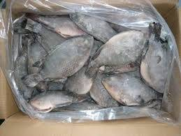 Sell Frozen Tilapia Fish