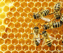 Wholesale Honey: BeeWax and Bee Pollen
