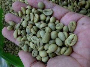 Wholesale green coffee: Java Robusta Green Coffee Beans Grade AP1