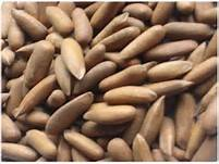 Wholesale pine nuts: 100% Nature Pine Nuts Wild Pine Nuts Organic Pine Nuts Kernels with Shells