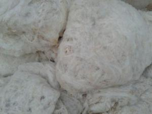 Wholesale Carpet & Rug: Wool