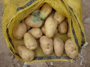 Wholesale Fresh Potatoes: Fresh Potatoes