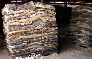 Wholesale wet salted donkey hides: Whole Wet Salted Cow & Donkey Hides