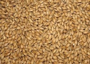 Wholesale malting barley: Feed Barley, Malt Barley Available