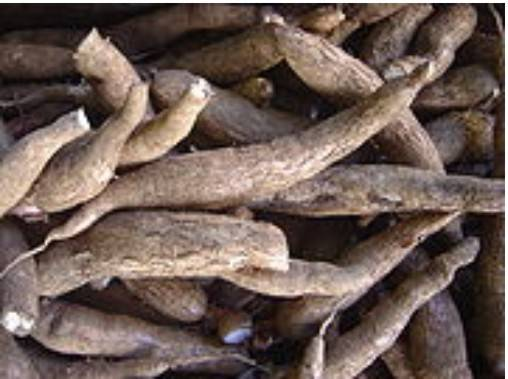 Sell CASSAVA CHIPS, FRESH CASSAVA