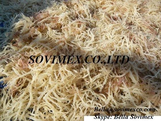Sell E.Cottonii/Spinosum Seaweed_Premium quality