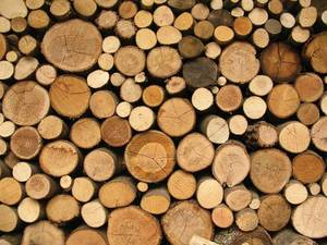 Wholesale timber logs: High Quality Timber and Logs